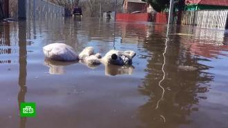 Весеннее половодье: спасатели взонах бедствия эвакуируют людей искотину