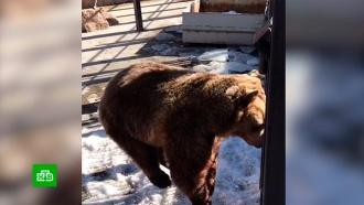 На Урале медведица дождалась весны изапрыгала от радости