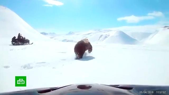 Полиция на Сахалине проверяет видео с погоней рыбаков за диким медведем.Сахалин, животные, медведи.НТВ.Ru: новости, видео, программы телеканала НТВ