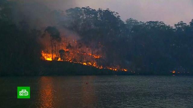 Лесные пожары подступают кпригородам Сиднея.Австралия, лесные пожары, пожары.НТВ.Ru: новости, видео, программы телеканала НТВ