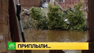 Сестра бушует: садоводства под Петербургом топит разлившаяся река