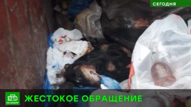 Забивший таксу петербуржец ответит за убийство собаки.Санкт-Петербург, жестокость, животные, собаки.НТВ.Ru: новости, видео, программы телеканала НТВ
