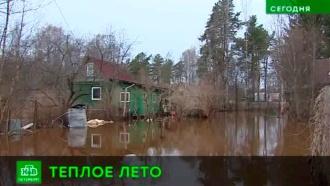 Синоптики пообещали петербуржцам теплое лето