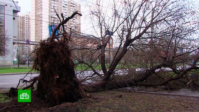 На Москву надвигаются гроза исильный ветер.Москва, весна, погода.НТВ.Ru: новости, видео, программы телеканала НТВ