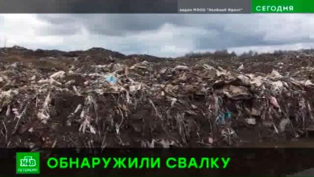 Экологи обнаружили гигантскую нелегальную свалку на юге Петербурга.Санкт-Петербург, мусор, экология.НТВ.Ru: новости, видео, программы телеканала НТВ