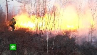 Более 66тысяч га леса охвачено огнем врегионах России