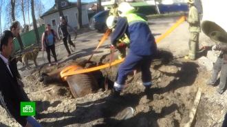 В Архангельске спасатели вытащили провалившегося в яму коня