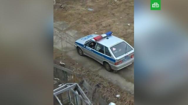 Полицейские прогнали медведя сдетской площадки вПечоре.НТВ.Ru: новости, видео, программы телеканала НТВ