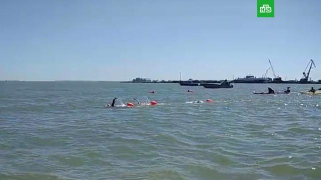 Тридцать россиян вплавь добрались до Крыма через Керченский пролив.Крым, плавание.НТВ.Ru: новости, видео, программы телеканала НТВ