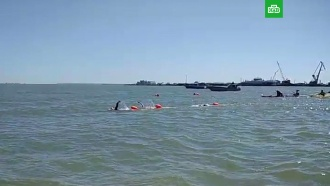 Тридцать россиян вплавь добрались до Крыма через Керченский пролив