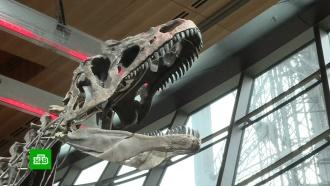 В Париже скелет динозавра продали за 2 млн евро