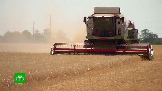 Внескольких районах Крыма из-за засухи погиб почти весь урожай зерновых.Крым, засуха, зерно, урожай.НТВ.Ru: новости, видео, программы телеканала НТВ