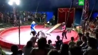 Медведь напал на дрессировщика в цирке под Волгоградом