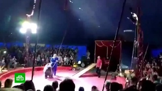 Цирк под Волгоградом проверят после нападения медведя на человека