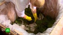 Красноярские фермеры заготовят на экспорт более 100тонн папоротника