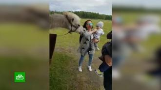Омичка подала в&nbsp;суд на страусиную ферму <nobr>из-за</nobr> кусающегося верблюда