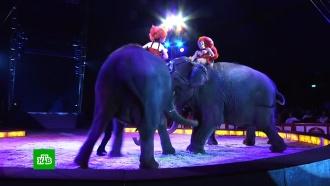 ВГермании слон чуть не раздавил зрителей цирка