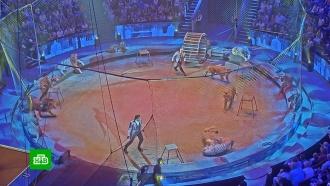Запашные рассказали о схватке тигра и льва в московском цирке