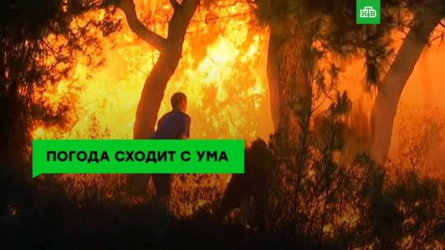 Убийственное пекло: жара вГреции, Швеции иЯпонии бьет рекорды.жара, погода, Швеция, Европа, Япония, пожары, лесные пожары, погодные аномалии, ЗаМинуту.НТВ.Ru: новости, видео, программы телеканала НТВ