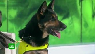 ВКолумбии наркомафия предложила 70тыс. долларов за жизнь полицейской собаки