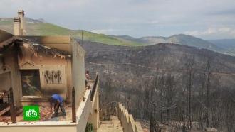 ВГреции находят спасшихся от лесных пожаров собак
