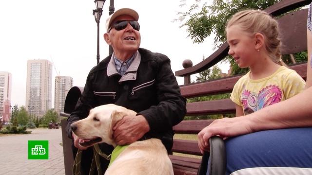 ВНовокузнецке слепой пенсионер получил от Деда Мороза собаку-поводыря.Кемеровская область, Новый год, инвалиды, подарки, слепые, собаки.НТВ.Ru: новости, видео, программы телеканала НТВ