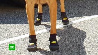 ВВене полицейским собакам раздали обувь для защиты от жары