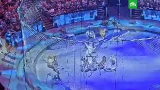 Тигры едва не растерзали Запашного во время выступления