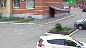 В Вологде полуторагодовалый ребенок сбежал из детского сада в одном подгузнике