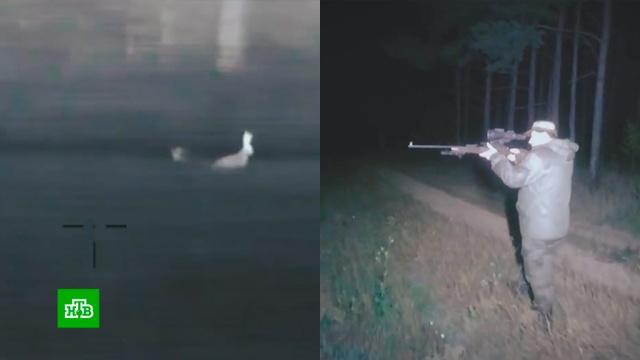 Охотничьи союзы предлагают запретить использование дронов и тепловизоров.браконьерство, животные, охота и рыбалка.НТВ.Ru: новости, видео, программы телеканала НТВ