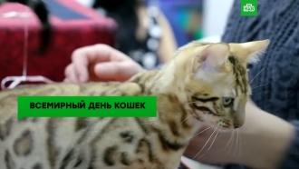 Без кота ижизнь не та: во всем мире отмечают День кошек