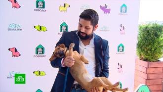 Перуанец вернулся в Россию за бездомным щенком, найденным во время ЧМ-2018