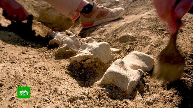 При строительстве железной дороги Крымского моста нашли скелет доисторического кита.Крым, археология, киты, мосты, строительство.НТВ.Ru: новости, видео, программы телеканала НТВ