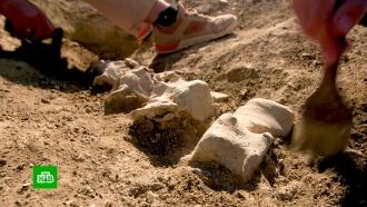 При строительстве железной дороги Крымского моста нашли скелет доисторического кита