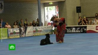 Сборная России стала лучшей на чемпионате мира по танцам с собаками
