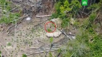 В джунглях Амазонки сняли племя, никогда не контактировавшее с цивилизацией