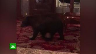 Медведь забрел в лобби популярного у туристов отеля в штате Колорадо