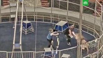Лев напал на дрессировщика в Большом московском цирке