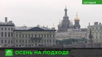 Школьные линейки в День знаний пройдут в Петербурге без дождей