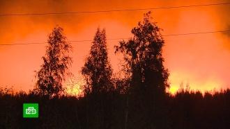 Врайоне военного полигона Погоново под Воронежем пылают 100гектаров леса