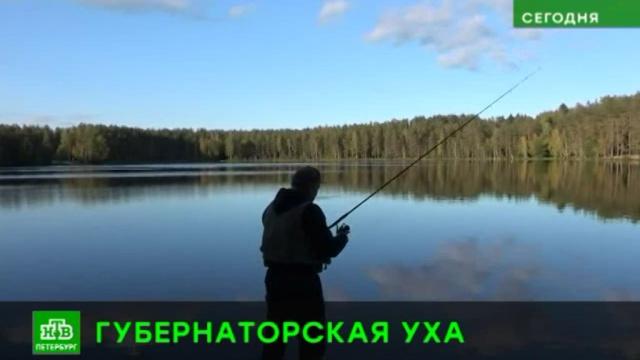 Губернатор Ленобласти поделился рецептом отменной ухи.YouTube, Ленинградская область, губернаторы, охота и рыбалка, соцсети.НТВ.Ru: новости, видео, программы телеканала НТВ