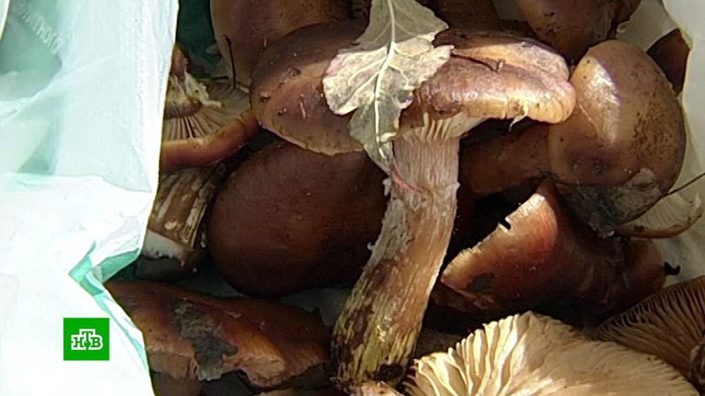 В Госдуме предложили выкупать у россиян ягоды, грибы, хворост и мох.Госдума, грибы, законодательство.НТВ.Ru: новости, видео, программы телеканала НТВ