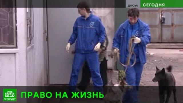 Петербурженка пытается через суд запретить выпускать обратно на улицу стерилизованных бездомных собак.Санкт-Петербург, животные, собаки, суды.НТВ.Ru: новости, видео, программы телеканала НТВ