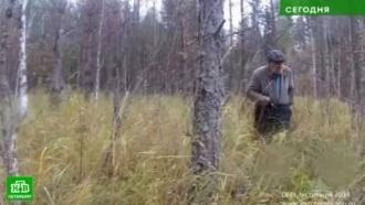 Добровольцы из Петербурга и области спасли рекордное количество грибников