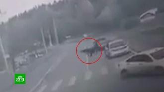 Дисциплинированный медведь в Красноярске перешел дорогу по зебре