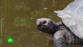 На Галапагосских островах неизвестные похитили 123слоновых черепахи