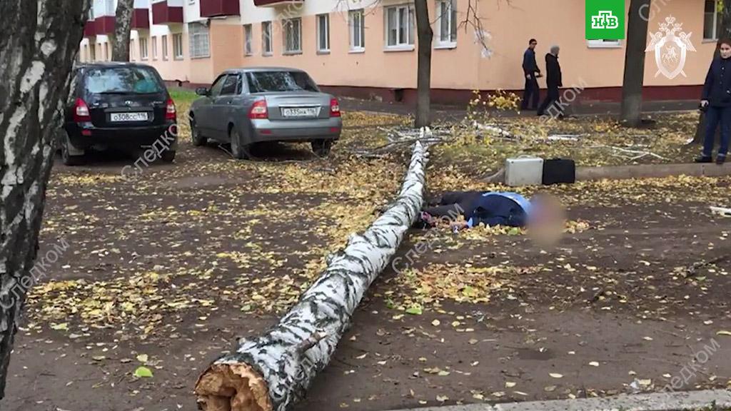 Татарстан. Из-за ветра берёза разбила голову прохожему, он умер (2018)