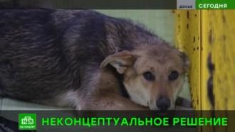 Горсуд Петербурга запретил возвращать на улицу вакцинированных бродячих собак