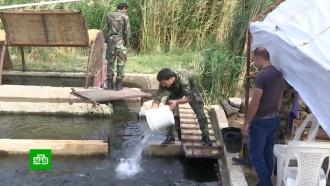 Под Дамаском восстанавливают разоренную террористами рыбную ферму