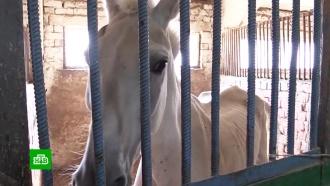 Истощенных полицейских лошадей взялись откармливать саратовские фермеры